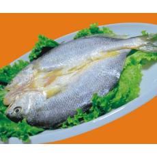 脱脂大黄鱼