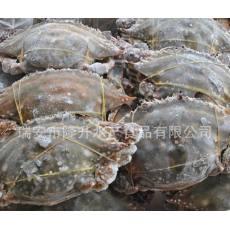 江蟹温州炎亭梭子蟹鲜活母海鲜鲜活新鲜海蟹