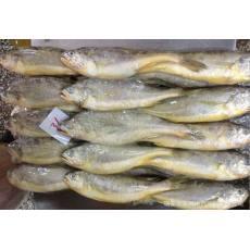 冷冻野生黄花鱼