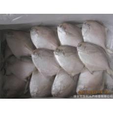 批发冷冻带鱼,带鱼段,腌制带鱼,腌制刺鲳